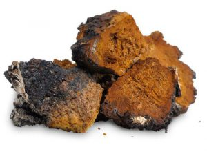 chaga medicinal mushrooms