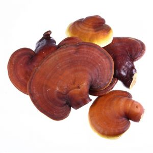 reishi medicinal mushrooms