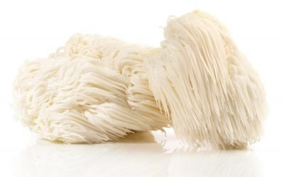 Lion's Mane Medicinal Mushrooms