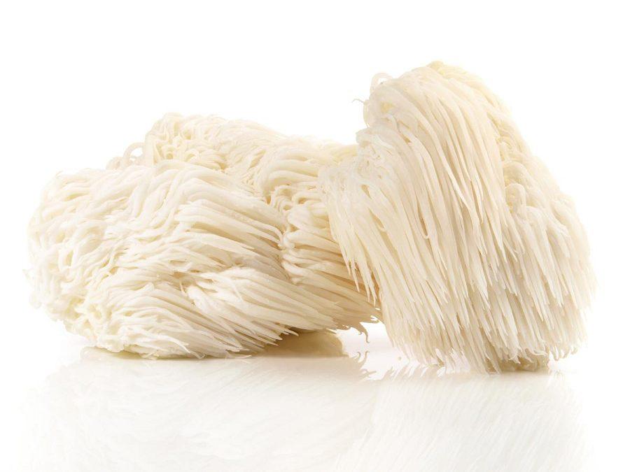 Lion's Mane Medicinal Mushrooms